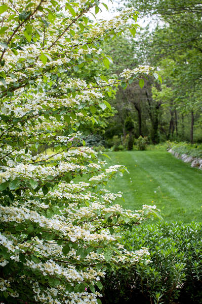 Garden And Landscape Photographer In Ct Allegra Anderson